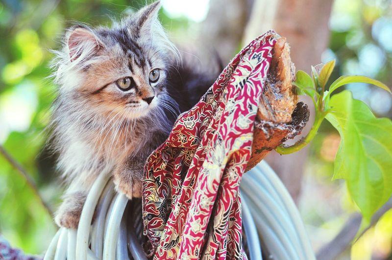 Animal Themes Persian Cat  Cat Lovers Cats Of EyeEm Cats 🐱 Kitten Kitten 🐱 Tree Close-up Animal Eye Yellow Eyes Cat Animal Head  HEAD