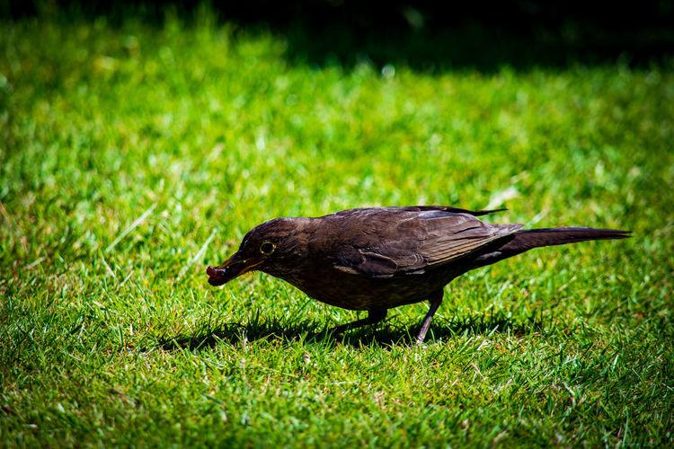 View of bird on grass
