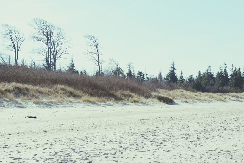 Baltic Sea landscape of Darss peninsula (Mecklenburg-Vorpommern, Germany) in springtime. Baltic Sea Baltic Sea Winter Beach Copy Space Darß Darß Dunes Germany Landscape Mecklenburg-Vorpommern Nature Ocean Outdoors Sand Shore Tourism Tree Vacations Water Wilderness Area