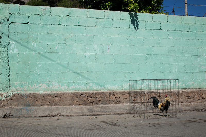 Dog standing by wall