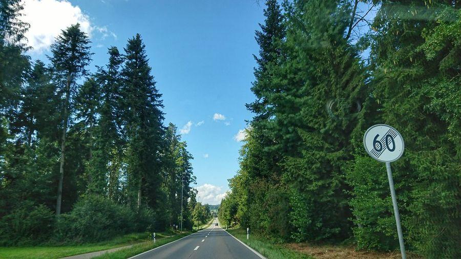 open road Tree
