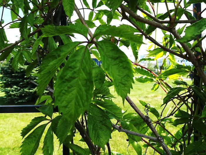Green Color Nature Plant Tree Day Growth Beauty In Nature Colors Street KazanCity Street Photo