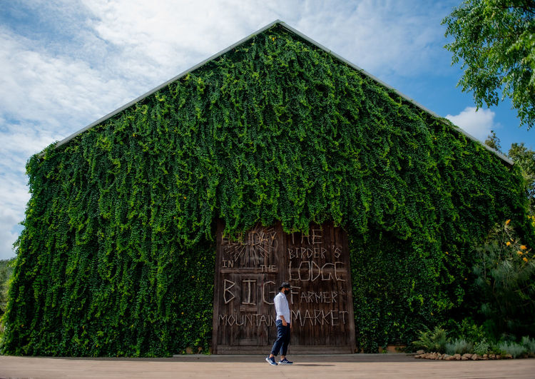 Woman standing by tree against building