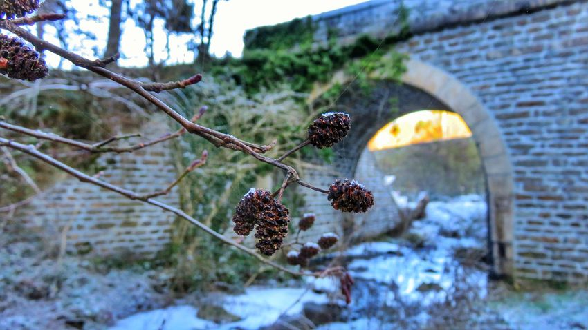 Tree Nature No People Outdoors Day Growth Plant Cold Temperature Architecture Sky Beautiful Colors Tree Plant Nature Winter Beautiful Beauty In Nature Tranquility Auvergne Allier Bridges River View Canon Canonpowershot Canonphotography