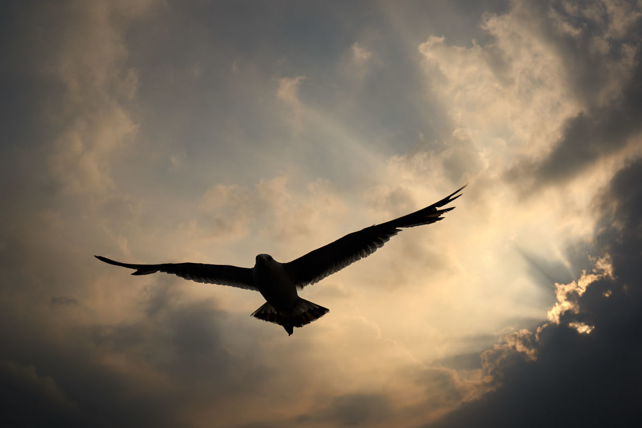 flying, cloud - sky, spread wings, sky, bird, animals in the wild, one animal, animal themes, sunset, low angle view, mid-air, nature, outdoors, no people, beauty in nature, day