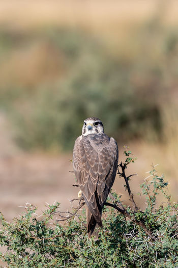 Portrait of owl perching on plant