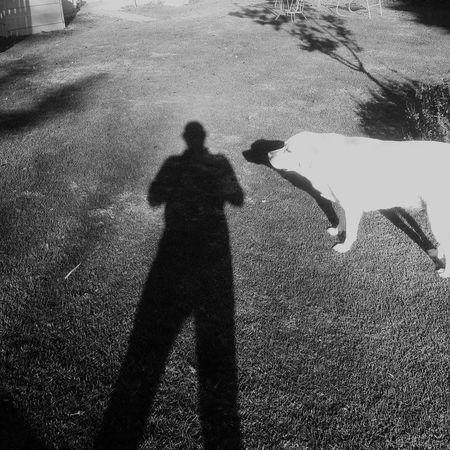 Black And White Shadows Labrador Retriever First Light