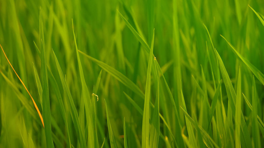 Full frame shot of grass