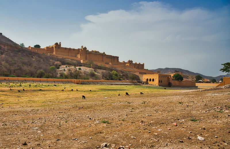 Wide angle view of amber fort Amber Amber Fort Animal Animal Themes Architecture Building Building Exterior Built Structure Cloud - Sky Day Domestic Animals Environment Field Group Of Animals Land Landscape Large Group Of Animals Livestock Mammal Nature No People Outdoors Sky