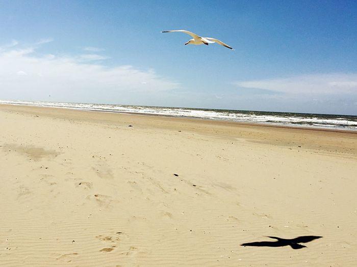 Enjoying The Sun Smartphonephotography Seagull Sand Sea