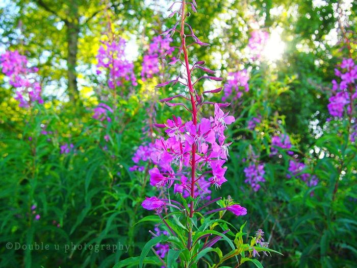 Purple Flower Growth Pink Color Nature Plant Beauty In Nature Outdoors No People Fragility Botanical Garden Freshness Close-up Day Nature_collection Olympus Camera Photograph Beauty In Nature Focus On Foreground Nature Magic Moments Social Issues