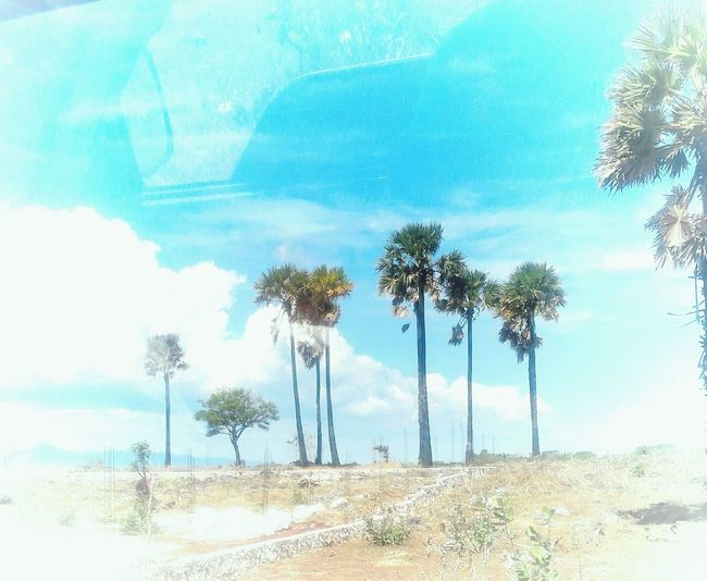 Kupang RSSOesapa EyeEm Indonesia Phography Landscape_photography Trees And Sky Week Of Eyeem Beauty In Nature