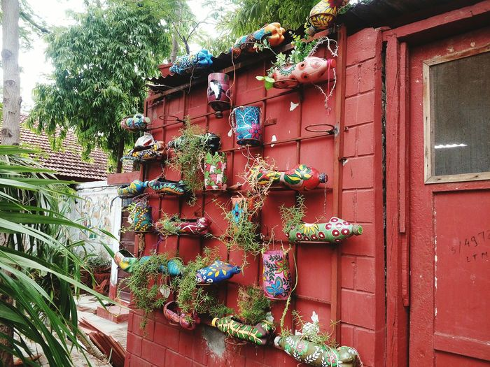 Architecture Residential Structure Plant Hanging Outdoors Potted Plant Growing Nature Day Wall - Building Feature Building Exterior Green Color Built Structure Bottleplant Creativity CreativePhotographer Creative Shots Creativeplant Indian Style Indiaclicks Indian Culture  Freshness Handmade Art