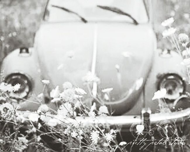 Fusca ♥♥ Hippies! ♥♥ Flowers ♥♥ Sunny ♥♥