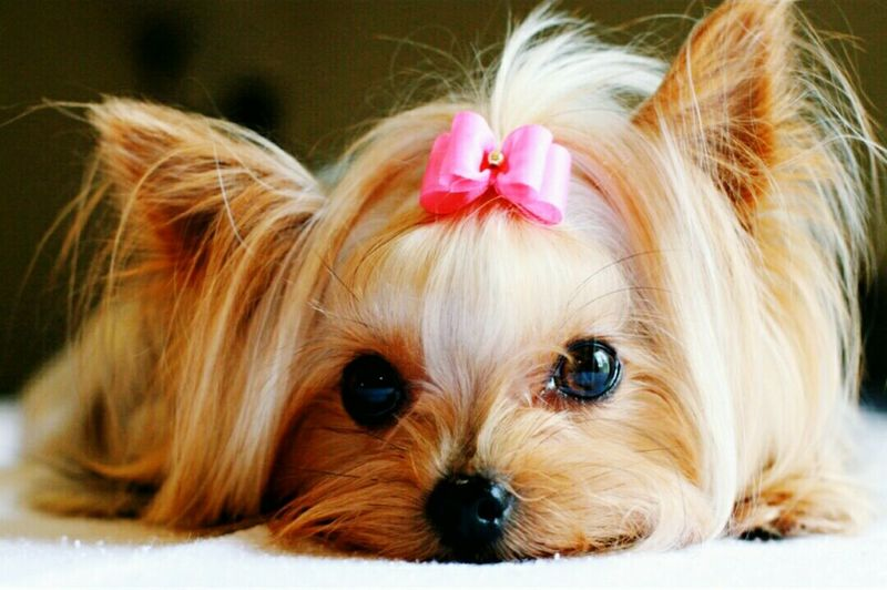Dog Animal Hair Domestic Animals Looking At Camera Animal Themes Animal Mammal Pets One Animal Portrait Long Hair Cute Blond Hair Beauty No People Close-up Day Outdoors First Eyeem Photo