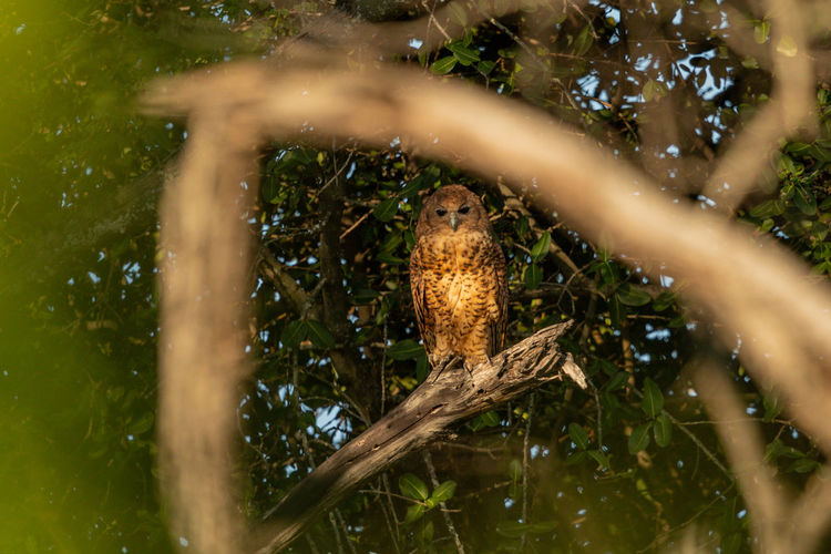 Low angle view of owl perching on branch
