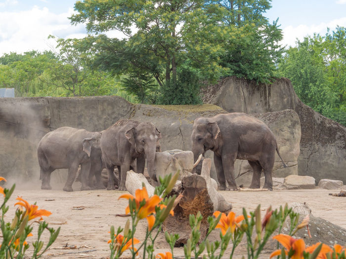 Plant Elephant