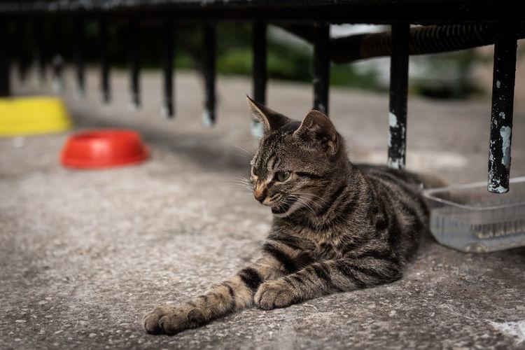 Street cat istanbul