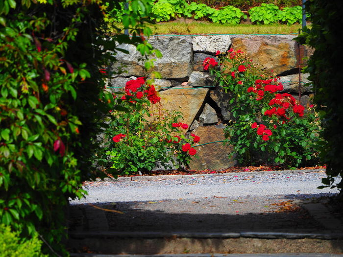 Rosegarden. Love walk! Roses Are Red Architecture Beauty In Nature Blooming Built Structure Enhanced Photograph Flower Fragility Freshness Green Color Growth Leaf Nature No People Outdoors Plant Red Roses🌹