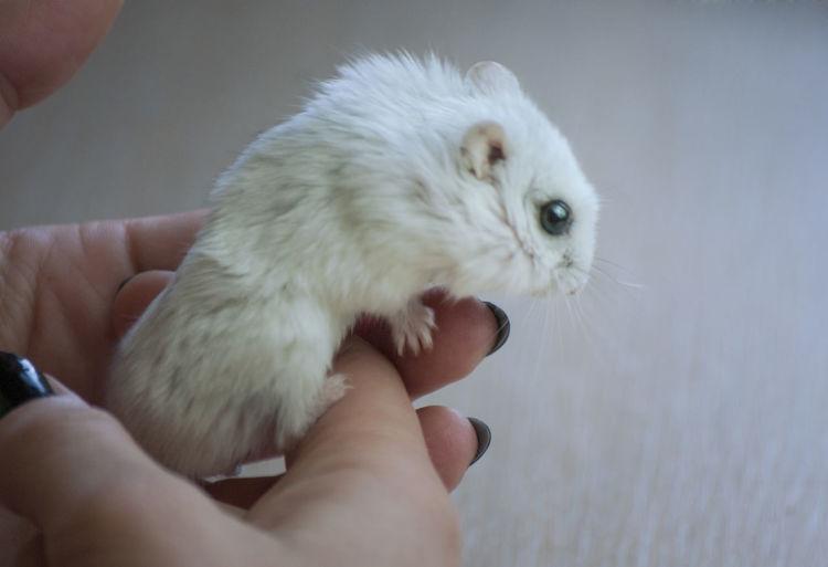 Close-up of hand holding white rabbit