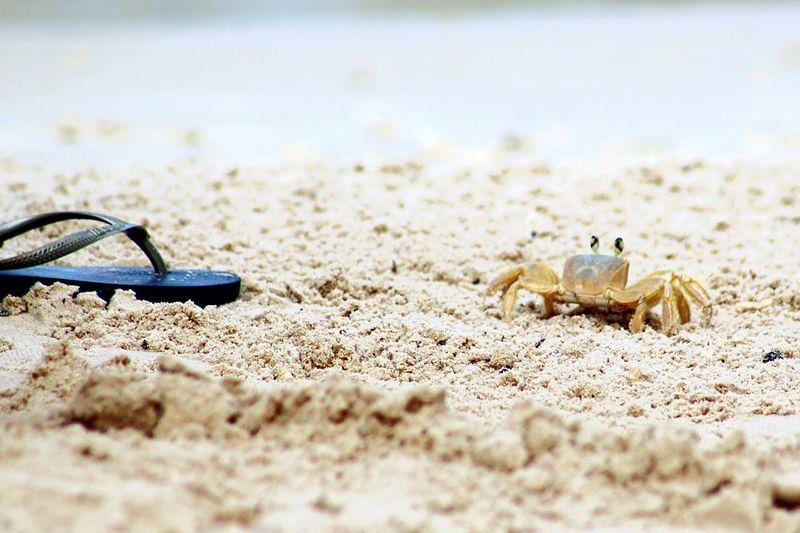 Sand Beach Day