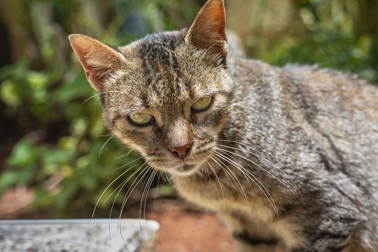 listen, human Feline Looking At Camera Drama Unhappy Mammal Portrait Closing Close-up Cat Ginger Cat Stray Animal Domestic Cat Kitten Animal Eye Carnivora Yellow Eyes