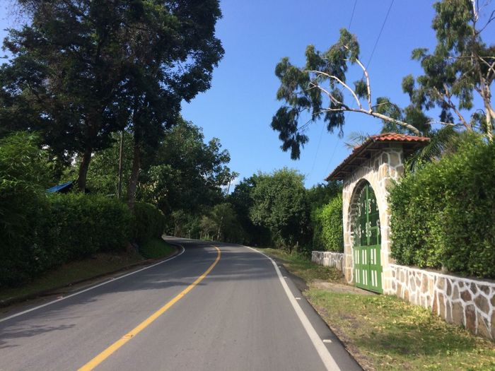 Camino Verde Tree Plant Road The Way Forward Direction Transportation Nature