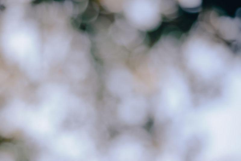 Defocused image of tree