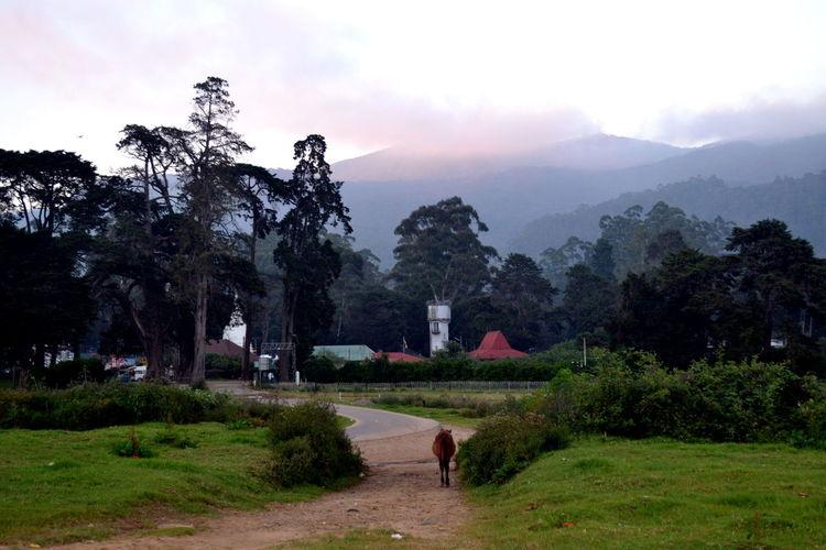 Colonial Architecture Colonial Style Evening Sky Fog Horse Horse Running Nuwaraeliya Sri Lanka Wildlife