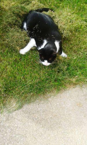 Cat Kallie