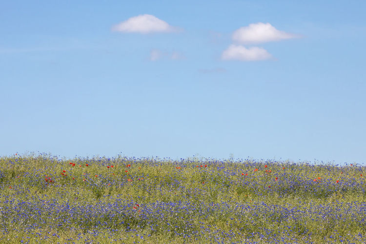 Wildflowers Growing On Field Against Clear Sky