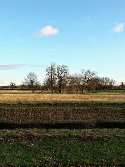 Blickling Hall Fields Trees Norfolk Uk