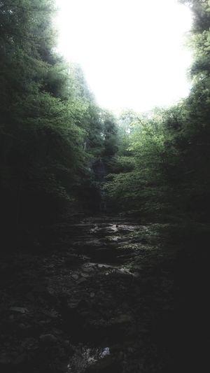 woodland Fine
