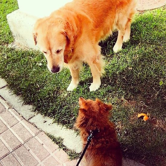 """""""hola hombre"""" doggie courtsy, street manner. MeetAndGreet Dogs"""