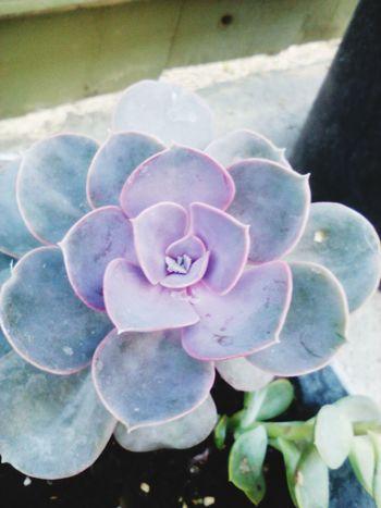 Cactus Plants nature