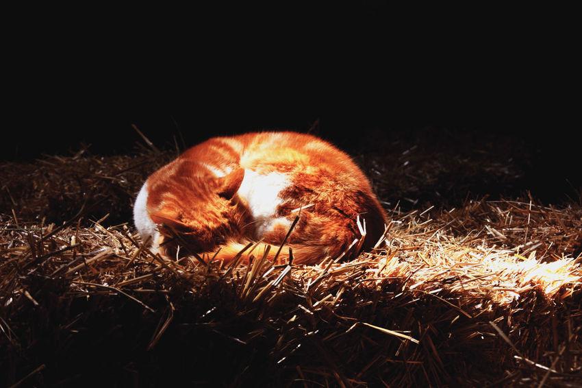 chllin' in the sun Cat Cat Lovers Sunlight Idyllic Sleeping Human Body Part Night Close-up Black Background Nature People Indoors  Mammal