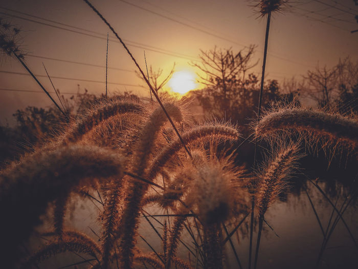 Sunrise from lakeside #Golden Hour Shiloutte Photography Shillouettes And Sunshine Mobile Photography HuaweiP9 Goa India Natural Beauty Planting Orange Golden Hour Golden Hour In Action Golden Hours Sunrise Sunrise And Plants Cat Tail Plant Cat Tail