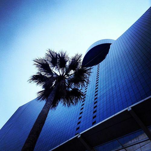 De visita nada mas!!!!! ? WTC Palm Sky