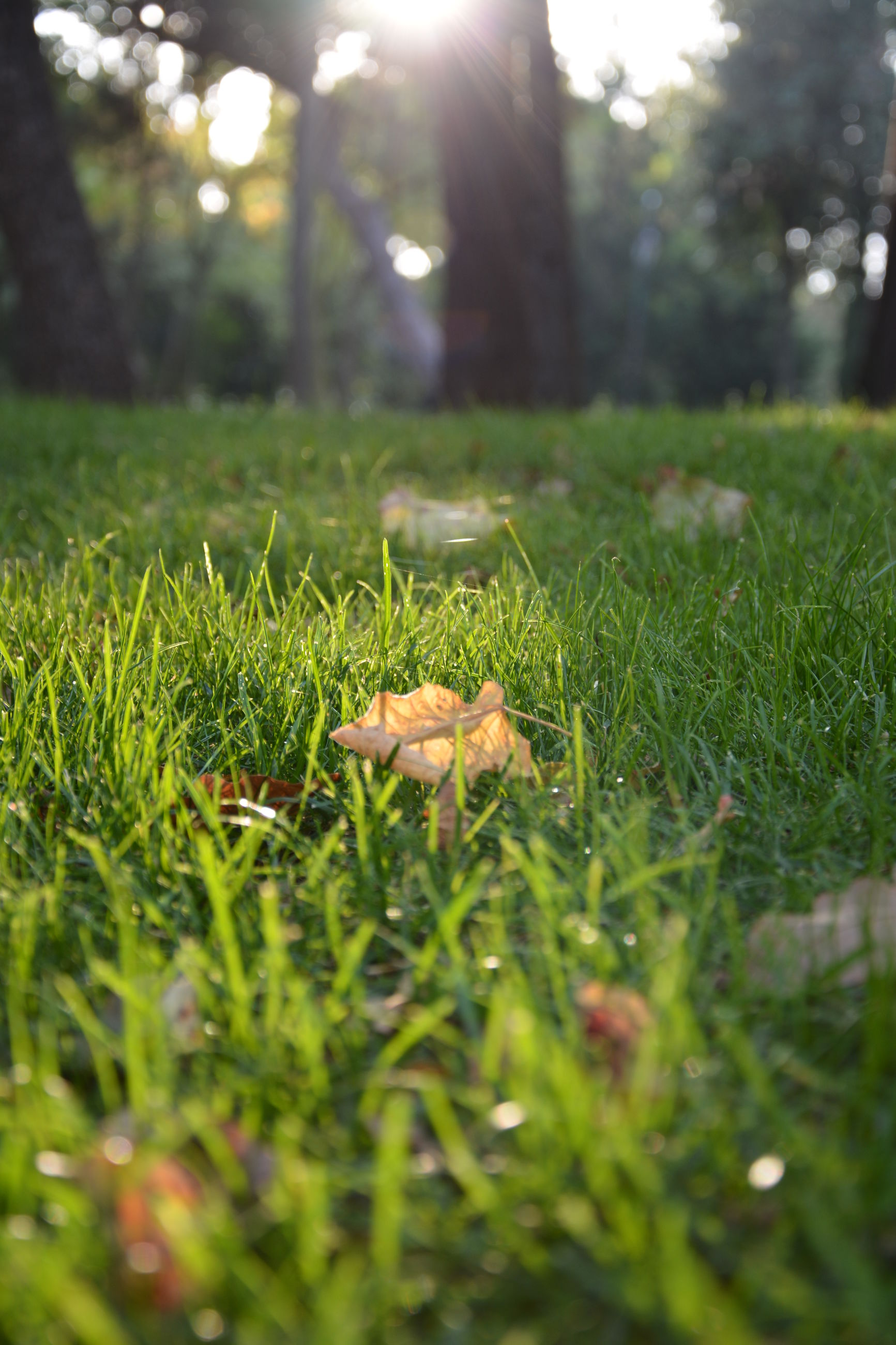grass, green color, grassy, selective focus, surface level, field, growth, focus on foreground, nature, sunlight, close-up, tranquility, grassland, lawn, blade of grass, plant, day, outdoors, no people, tree