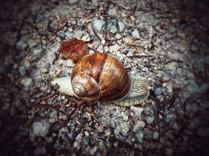 Slug Animal