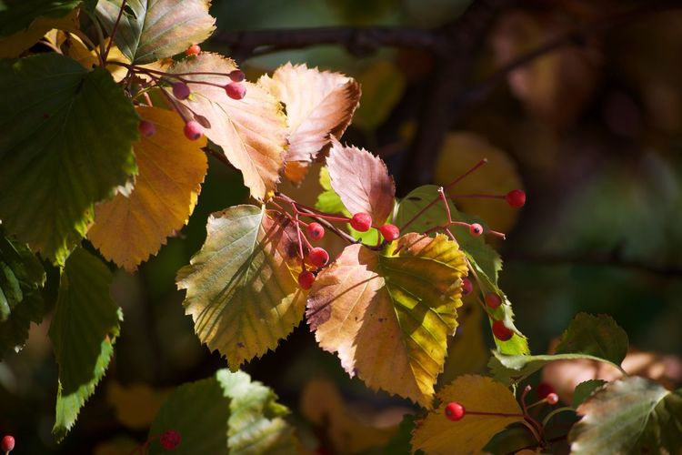 Autumn Beauty In Nature Branch Close-up Day Flower Freshness Growth Leaf Nature No People Outdoors Plant Springtime
