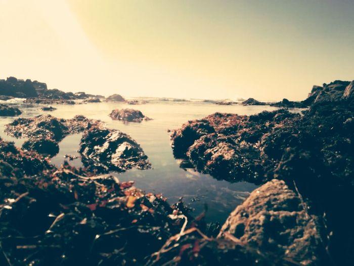 Tidepools Seacreatures Asilomar Monterey Ilivewhereyouvacation Shoreline Beach Perspective Seaweed Sand Shore Tide