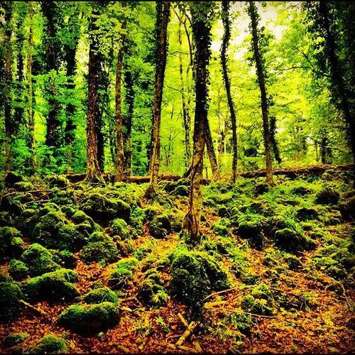 Forest Gargano Foresta Forestaumbra Exploregargano