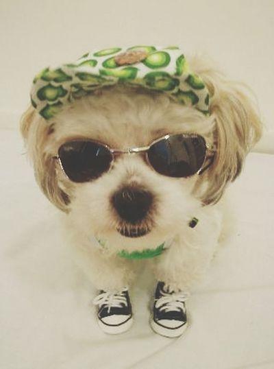 Dogs Of EyeEm I❤dogs Dogs Dog Fashion