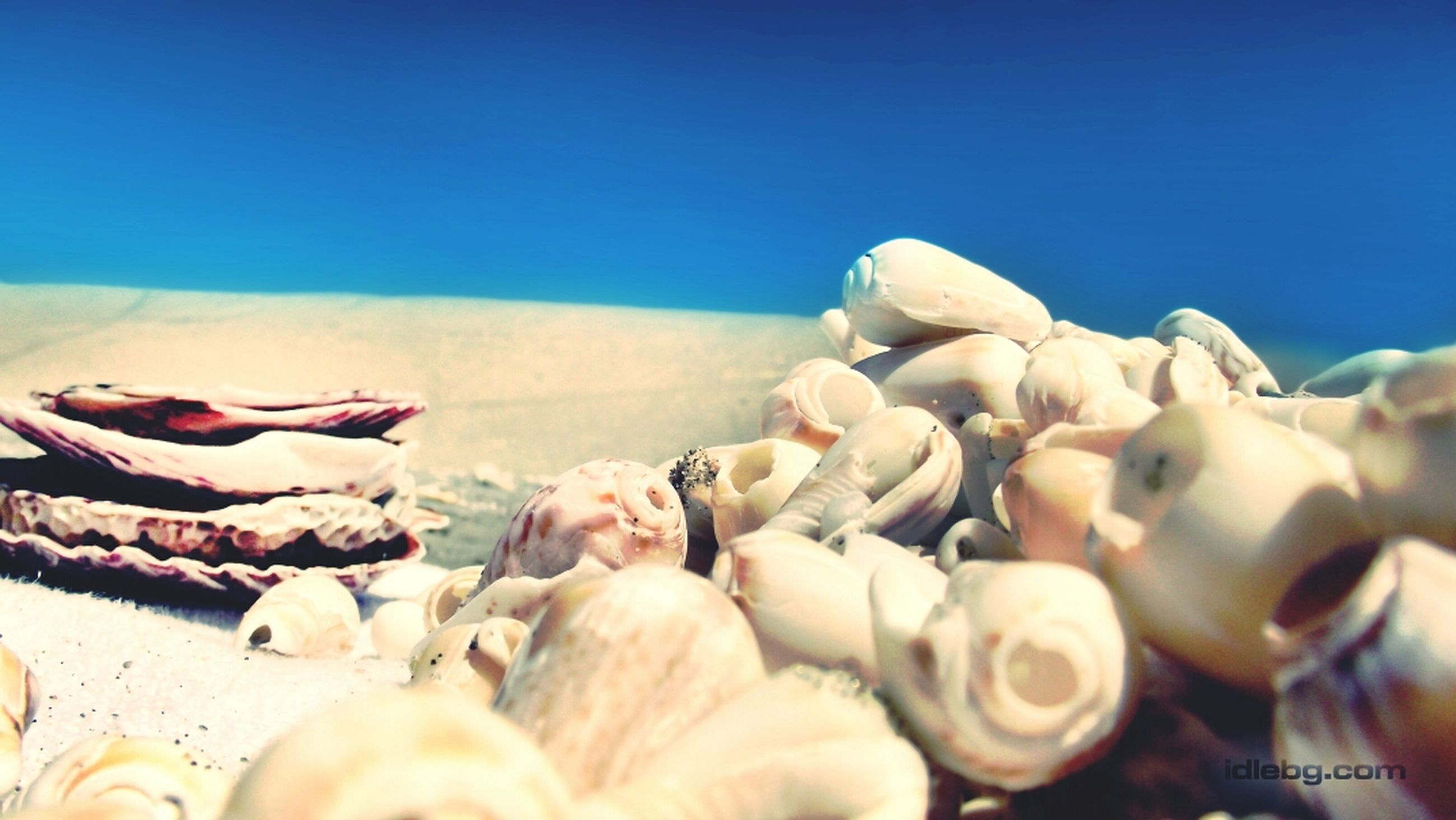 clear sky, food, food and drink, large group of objects, still life, abundance, copy space, close-up, stack, blue, in a row, no people, group of objects, focus on foreground, day, variation, beach, heap, arrangement, freshness
