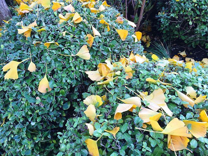 Yellow flowers growing on tree
