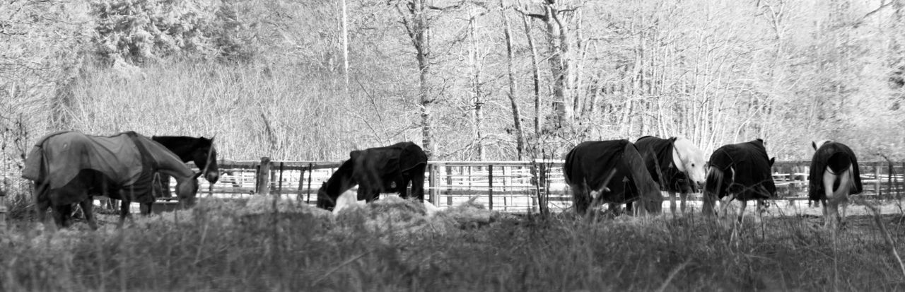 Capture The Moment Noir Et Blanc Love Photography Canonphotography Apprendre La Photo Passion Decembre Foret Nature Is Beautiful From My Point Of View Photographier De Loin Chevaux Animaux Bellles Montures 🐎🌳❤