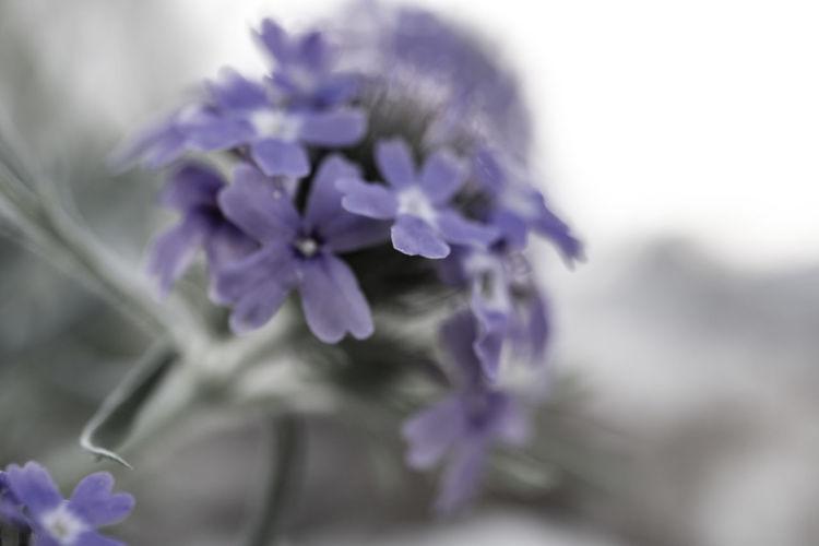 Creativity Nature Soft Close-up Flower Flowers Macro Monochrome Soft Focus