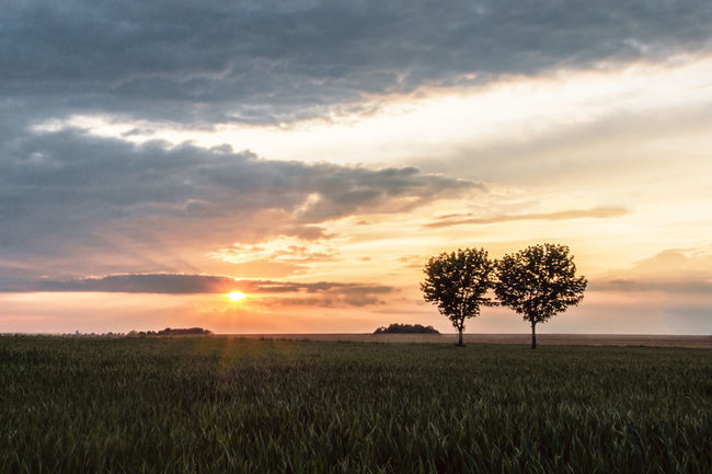 Forever Evening Light Trees Agriculture Beauty In Nature Clouds And Sky Day Field Grass Growth Landscape Lone Nature No People Outdoors Rural Scene Scenics Sky Sun Sunset Tranquil Scene Tranquility Tree Trees And Sky Trees And Sun