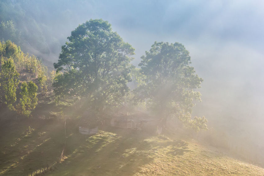 Hills Misty Morning Rural Sunny Travel Weather Countryside Day Environment Foggy Forest Land Landscape Meadow Mountain Old House Outdoors Park Scenery Scenics - Nature Season  Summer Tourism Tree